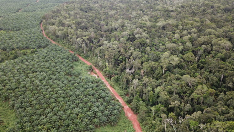Palm oil plantation in Indonesia. Photo: PUSAKA.